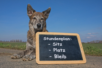 Hund mit Tafel, Hundeschule